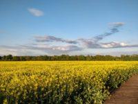 WM Fields 4